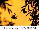big beautiful horned beetle... | Shutterstock . vector #1029630943