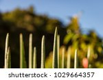 pointy leaves with dew drops... | Shutterstock . vector #1029664357