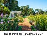 Stock photo palermo rose garden 1029696367