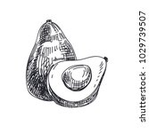 beautiful vector hand drawn...   Shutterstock .eps vector #1029739507