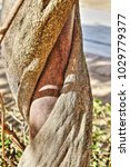 Small photo of wisteria trunk entangled on iron rod in winter
