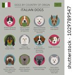 dogs by country of origin.... | Shutterstock .eps vector #1029789547
