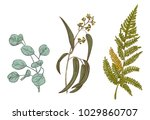 set of green leaves  greenery   ... | Shutterstock .eps vector #1029860707
