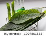 science research leaves of... | Shutterstock . vector #1029861883
