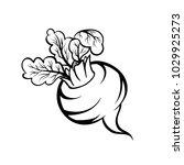 vector hand drawn illustration... | Shutterstock .eps vector #1029925273