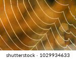 necklace spider web and dew... | Shutterstock . vector #1029934633