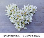 Snowdrop Little Flowers Heart...