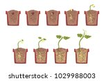 plant seed growth  development... | Shutterstock .eps vector #1029988003