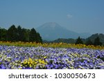 daisen with flowers  | Shutterstock . vector #1030050673