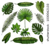 set of green tropical leaf | Shutterstock .eps vector #1030062133