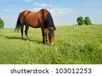 horse and field close up - stock photo