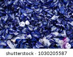 blue jelly fish  velella  and... | Shutterstock . vector #1030205587