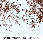 bushes of wild roses in the... | Shutterstock .eps vector #1030344673