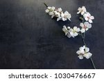 sprig of flowering almond on a... | Shutterstock . vector #1030476667