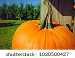 Pumpkin In Pumpkin Shed