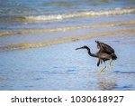 bird great billed heron  ardea...   Shutterstock . vector #1030618927