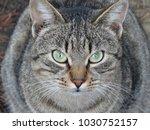 cat feline animal | Shutterstock . vector #1030752157