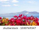 beautifull summer flowers.... | Shutterstock . vector #1030769347
