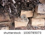 the dead rat lies on the wood | Shutterstock . vector #1030785073