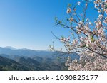 landscape with flowering trees...   Shutterstock . vector #1030825177