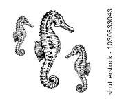 sea horse hand drown... | Shutterstock .eps vector #1030833043