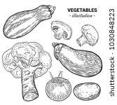vegetables hand drawn sketch... | Shutterstock .eps vector #1030848223