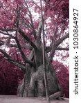 Small photo of Adansonia tree nature