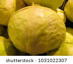 fresh cabbage grown in the... | Shutterstock . vector #1031022307
