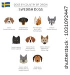 dogs by country of origin.... | Shutterstock .eps vector #1031092447