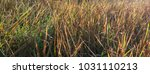 the nature grass background and ... | Shutterstock . vector #1031110213