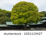 a big tree in the japanese... | Shutterstock . vector #1031115427