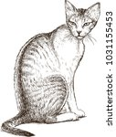sketch of a sitting watching cat   Shutterstock .eps vector #1031155453