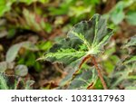 close up of green leave plant.... | Shutterstock . vector #1031317963