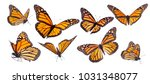 Stock photo variation on different positions of the beautiful monarch butterfly 1031348077