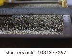 green coffee beans grading | Shutterstock . vector #1031377267