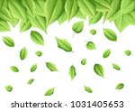green leaves natural paint on... | Shutterstock . vector #1031405653