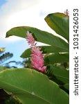 hawaiian flowers on kauai ...   Shutterstock . vector #1031426053