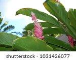hawaiian flowers on kauai ...   Shutterstock . vector #1031426077