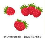 raspberry  vector illustration | Shutterstock .eps vector #1031427553