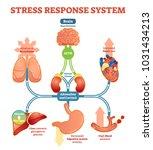 stress response system vector... | Shutterstock .eps vector #1031434213