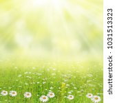 Stock photo summer background meadow with a flower of camomiles 1031513323