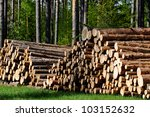 Pine timber, ready for transport from forest - stock photo