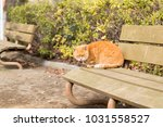 stray cats are very cute | Shutterstock . vector #1031558527