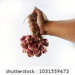 the chef's hand holds a... | Shutterstock . vector #1031559673