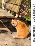 stray cats are very cute | Shutterstock . vector #1031565787