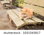 stray cats are very cute | Shutterstock . vector #1031565817