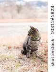 stray cats are very cute | Shutterstock . vector #1031565823