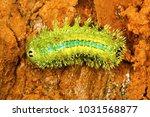 close view of nettles... | Shutterstock . vector #1031568877