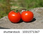 two ripe tomatoes outdoors on... | Shutterstock . vector #1031571367