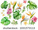Stock photo set of tropical plants and flowers on white background watercolor hand drawing leaves of palms 1031573113